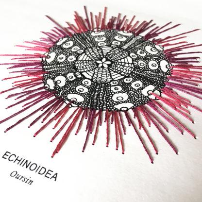 Echinoidea, Kit de Broderie sur papier